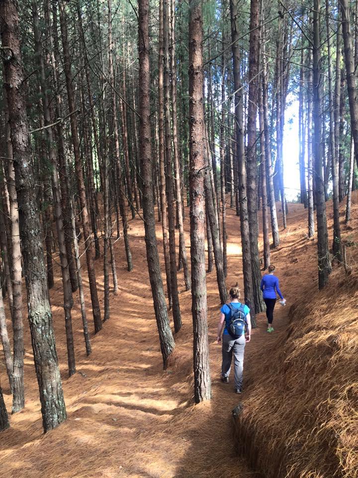 enchanted quebrada forest